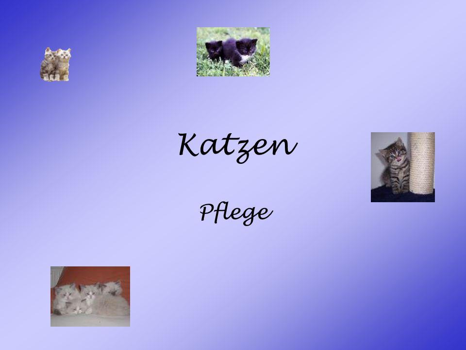 Katzen Pflege