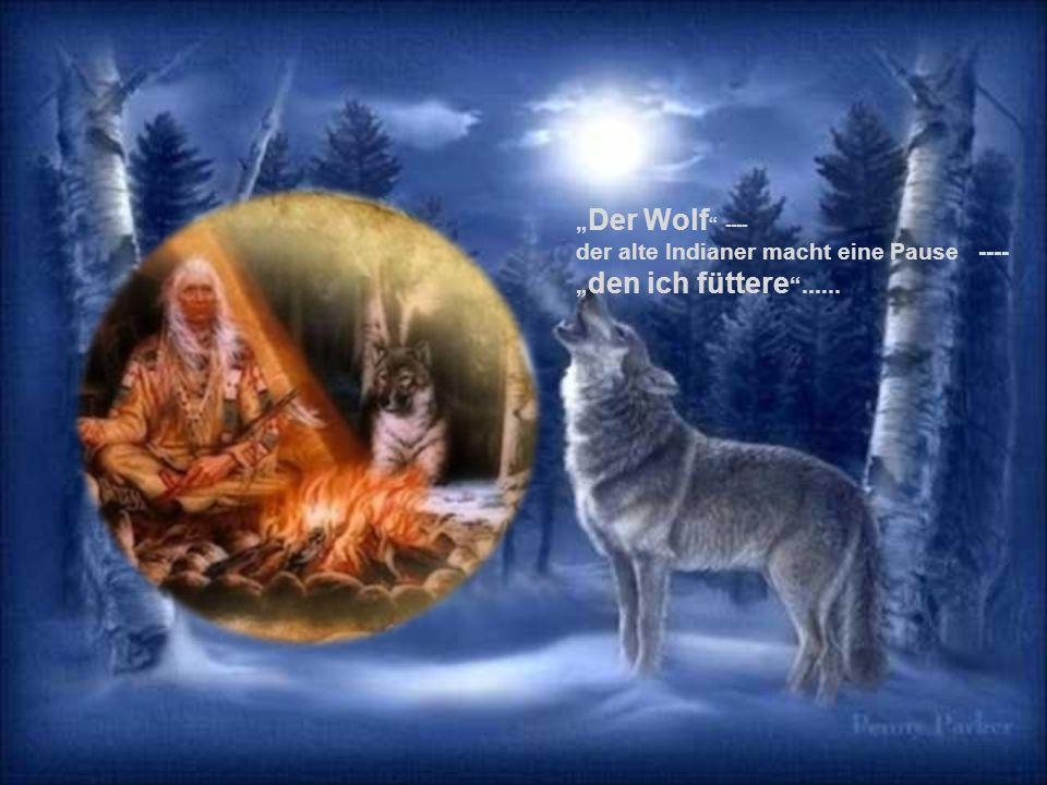 """""""Der Wolf ---- der alte Indianer macht eine Pause ---- """"den ich füttere ......"""