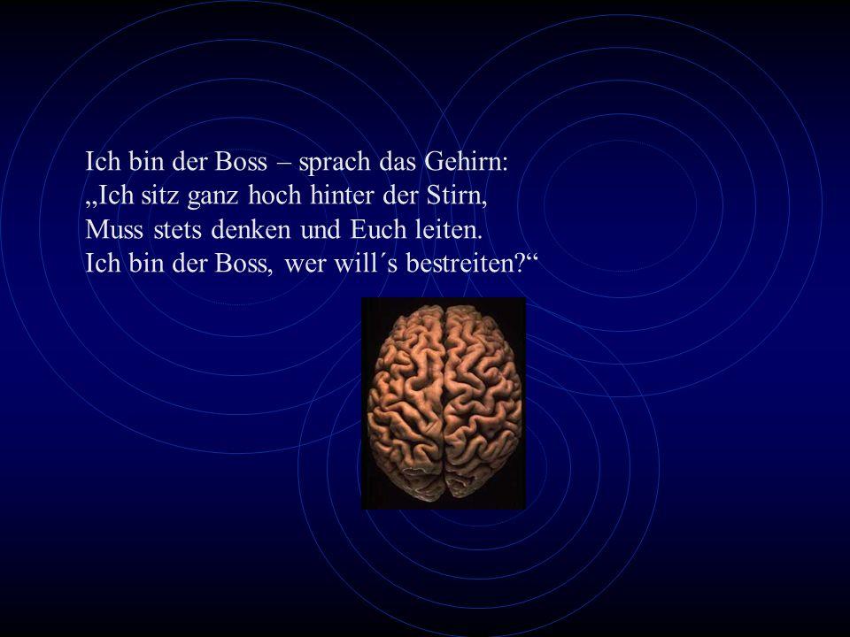 Ich bin der Boss – sprach das Gehirn: