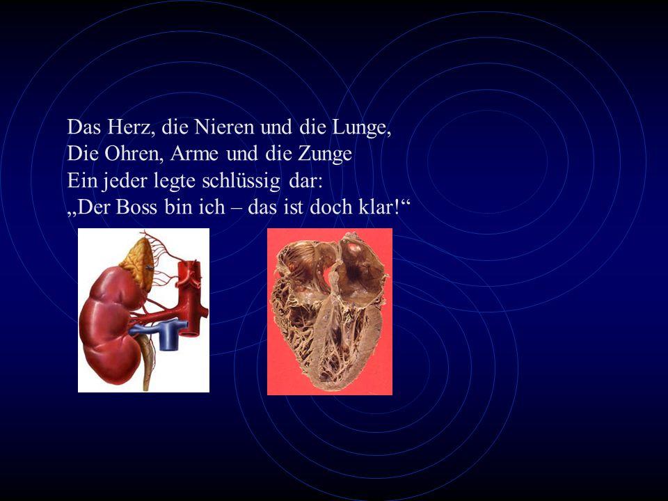 Das Herz, die Nieren und die Lunge,