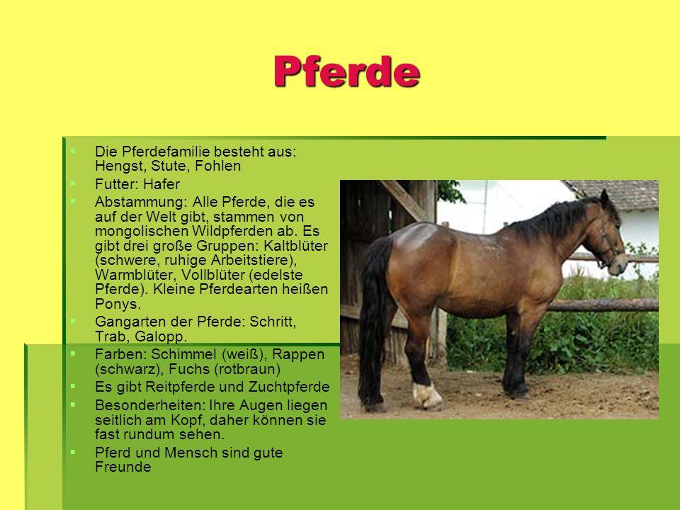 Pferde Die Pferdefamilie besteht aus: Hengst, Stute, Fohlen