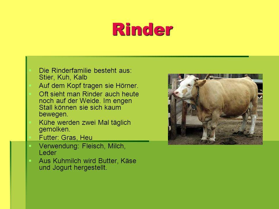 Rinder Die Rinderfamilie besteht aus: Stier, Kuh, Kalb