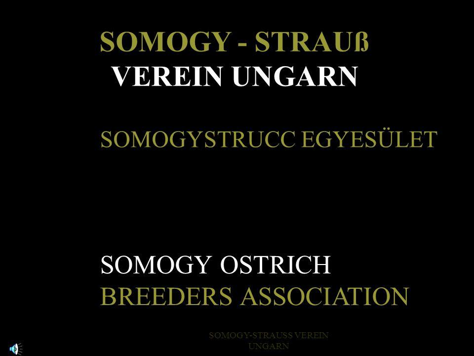 SOMOGY - STRAUß VEREIN UNGARN