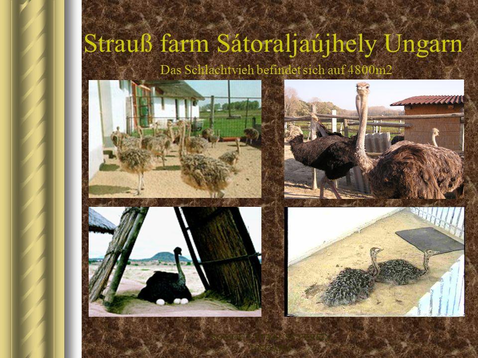 Strauß farm Sátoraljaújhely Ungarn