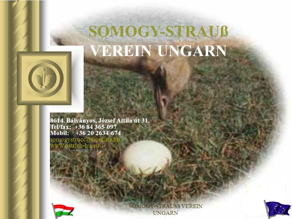 SOMOGY-STRAUß VEREIN UNGARN
