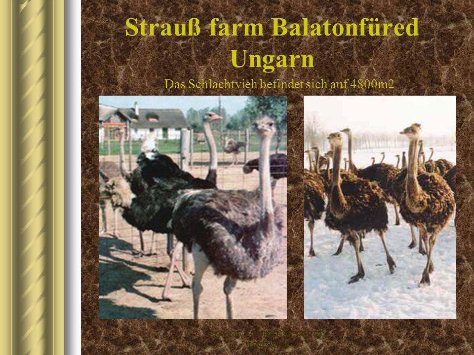 Strauß farm Balatonfüred Ungarn