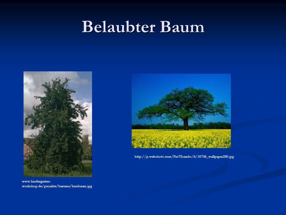 Belaubter Baum http://p.webshots.com/ProThumbs/6/50706_wallpaper280.jpg.
