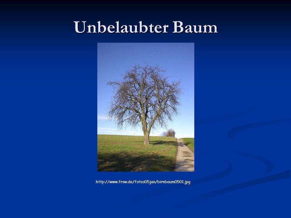 Unbelaubter Baum http://www.frsw.de/fotos05jan/birnbaum0501.jpg