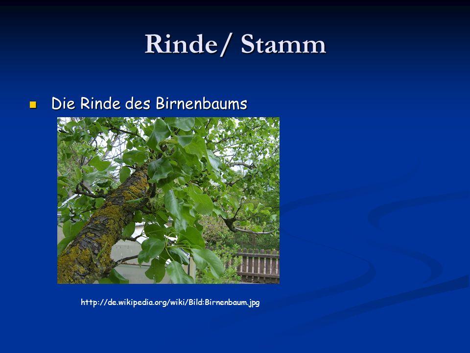 Rinde/ Stamm Die Rinde des Birnenbaums