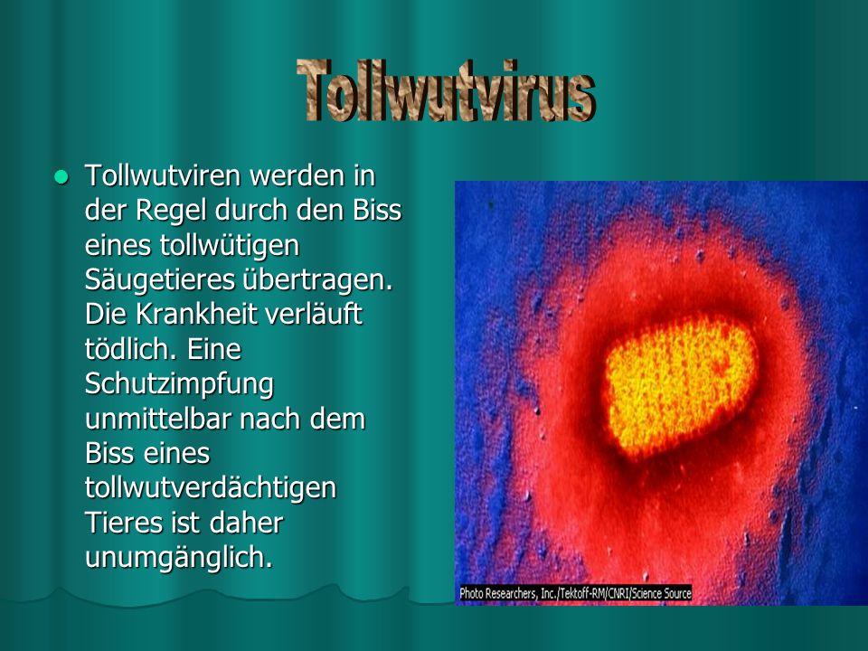Tollwutvirus
