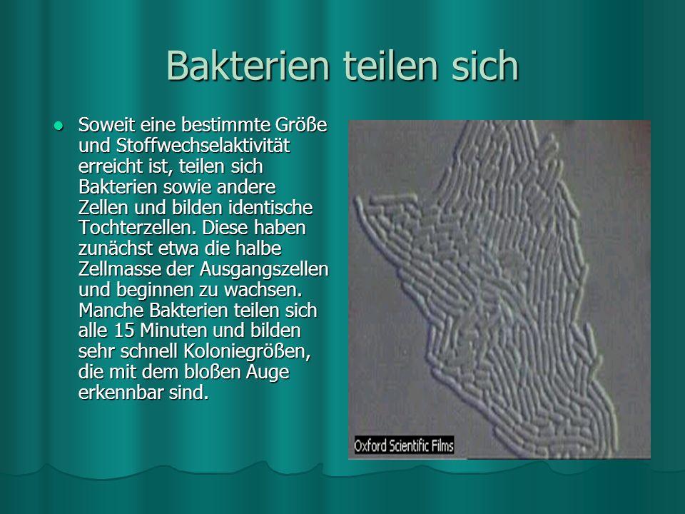 Bakterien teilen sich