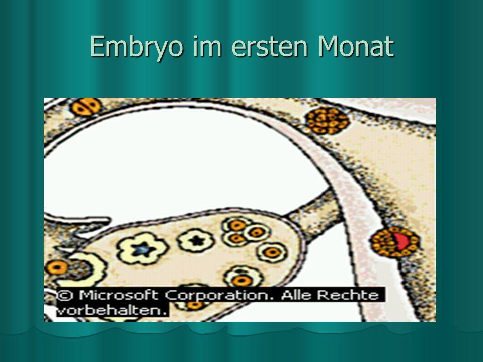 Embryo im ersten Monat