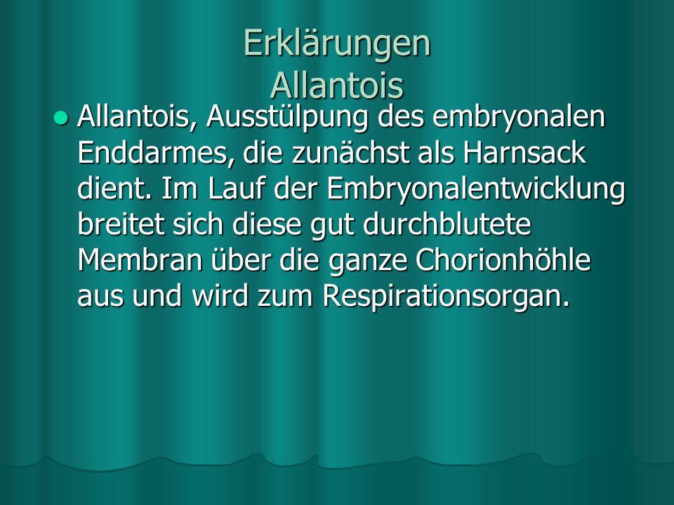 Erklärungen Allantois