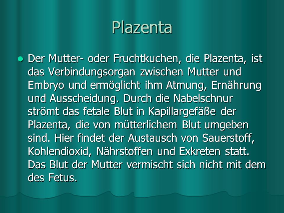 Plazenta
