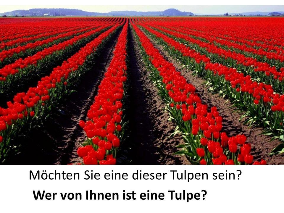 Möchten Sie eine dieser Tulpen sein