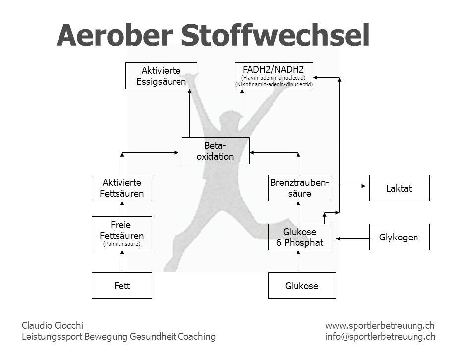 Aerober Stoffwechsel Aktivierte Essigsäuren FADH2/NADH2 Beta-