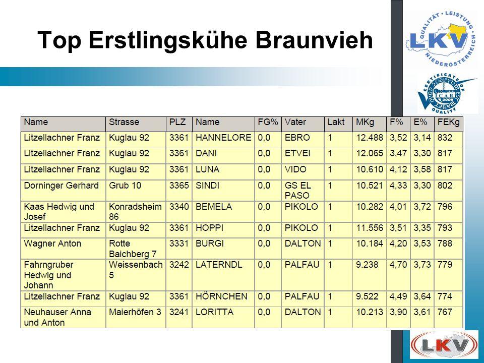 Top Erstlingskühe Braunvieh