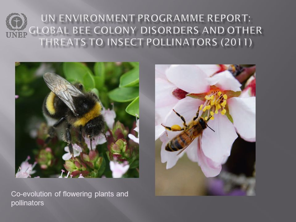 UN Environment Programme report: Global bee colony disorders and other threats to insect pollinators (2011)