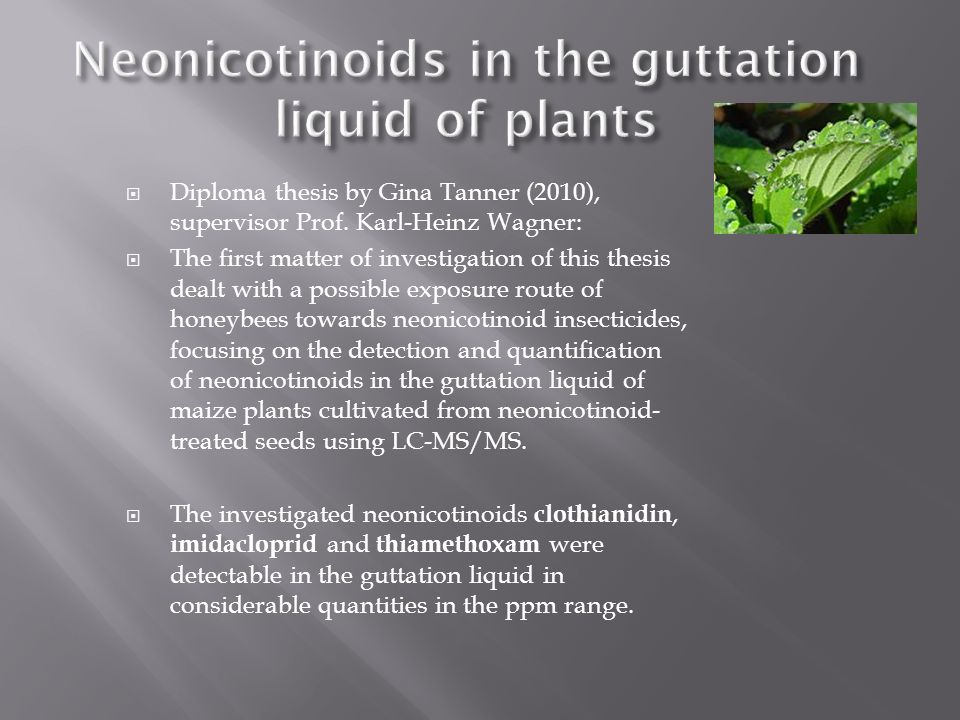 Neonicotinoids in the guttation liquid of plants
