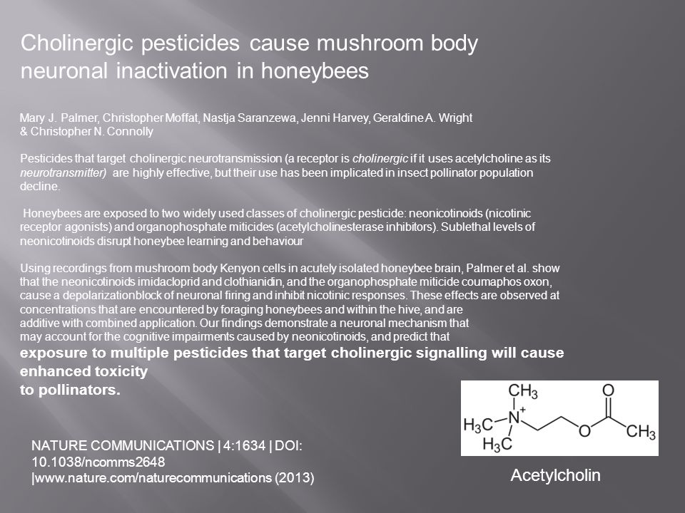 Cholinergic pesticides cause mushroom body
