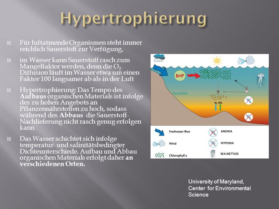 Hypertrophierung Für luftatmende Organismen steht immer reichlich Sauerstoff zur Verfügung,