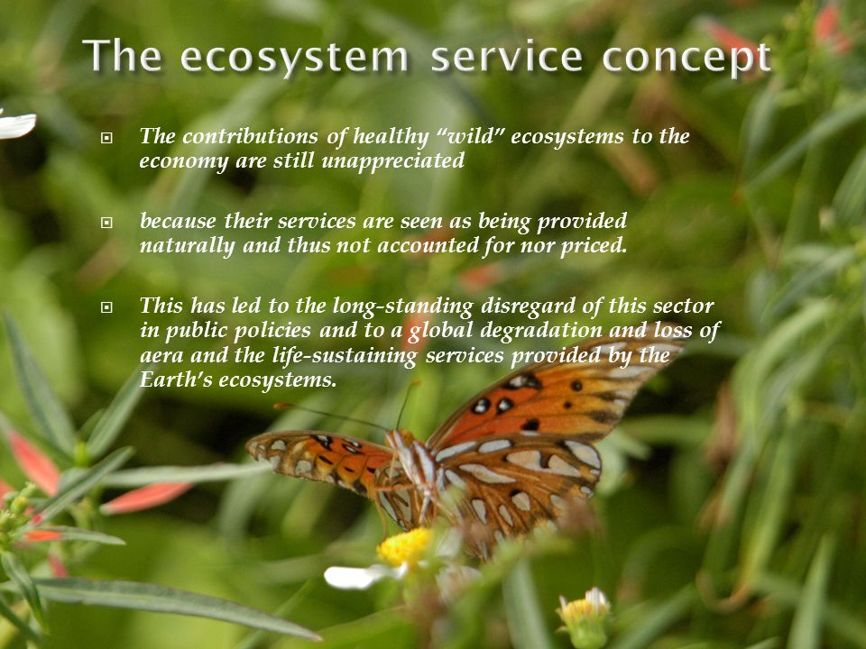 The ecosystem service concept