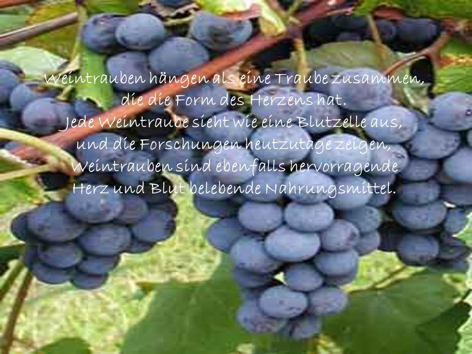 Weintrauben hängen als eine Traube zusammen,