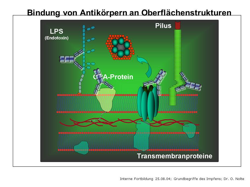 Bindung von Antikörpern an Oberflächenstrukturen