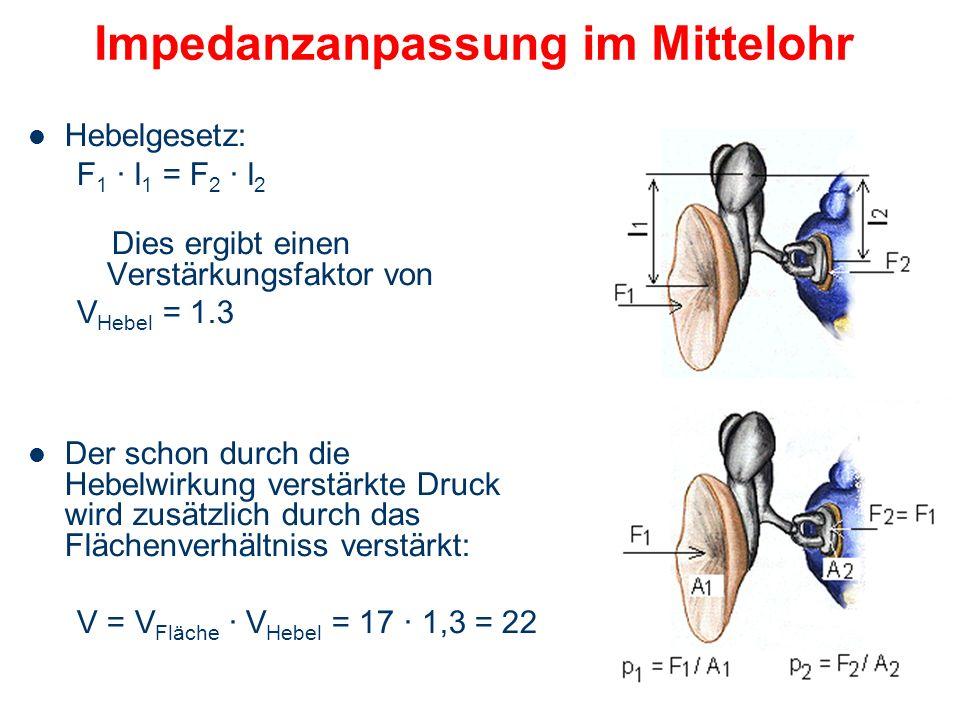 Impedanzanpassung im Mittelohr
