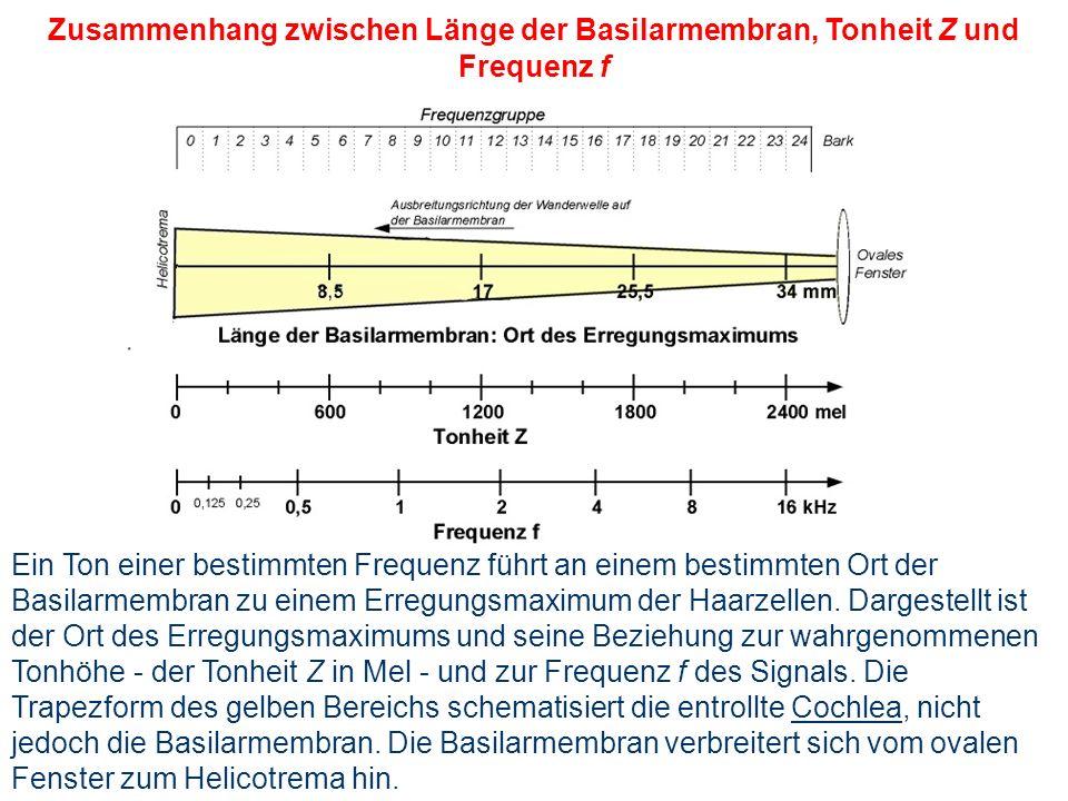 Zusammenhang zwischen Länge der Basilarmembran, Tonheit Z und Frequenz f