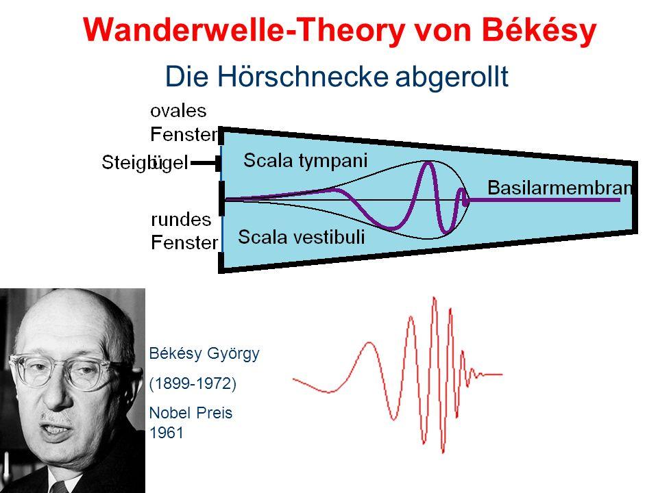 Wanderwelle-Theory von Békésy