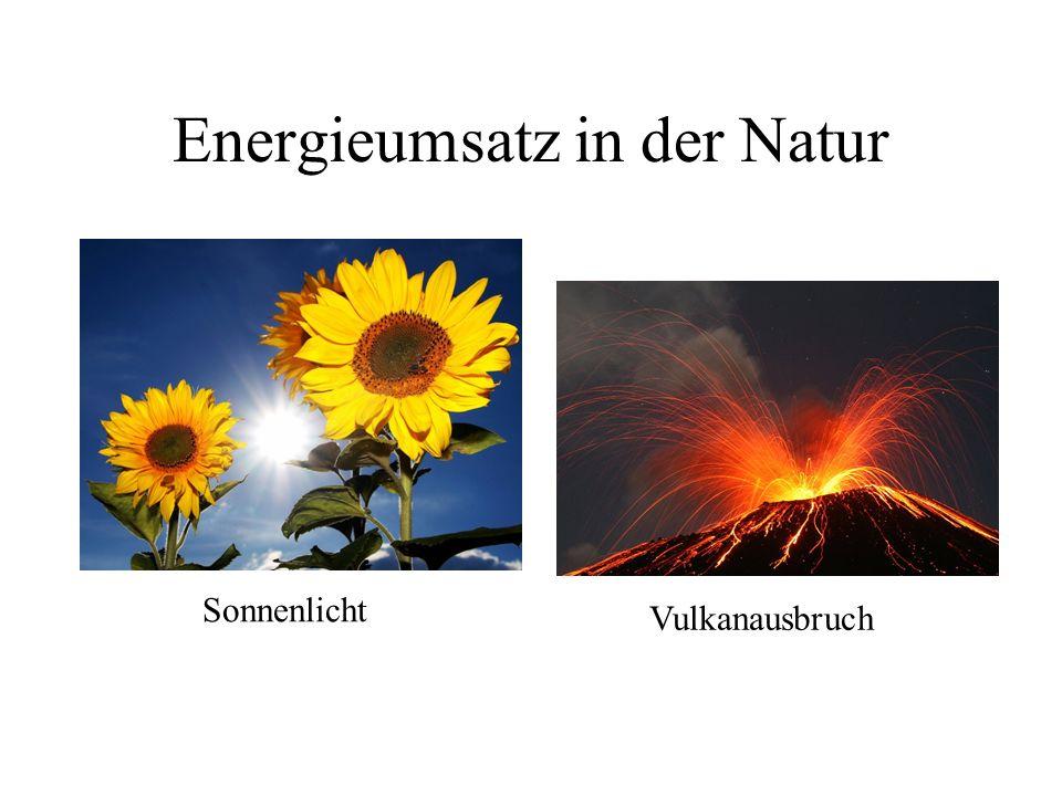 Energieumsatz in der Natur
