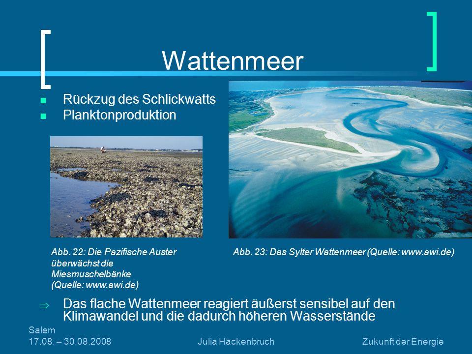 Wattenmeer Rückzug des Schlickwatts Planktonproduktion