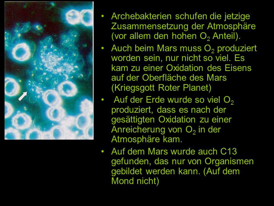 Archebakterien schufen die jetzige Zusammensetzung der Atmosphäre (vor allem den hohen O2 Anteil).