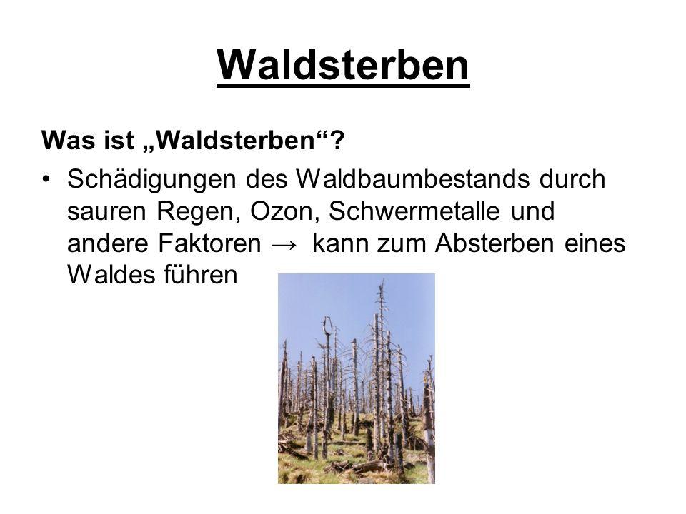 "Waldsterben Was ist ""Waldsterben"