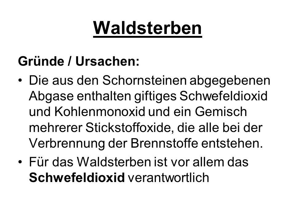 Waldsterben Gründe / Ursachen: