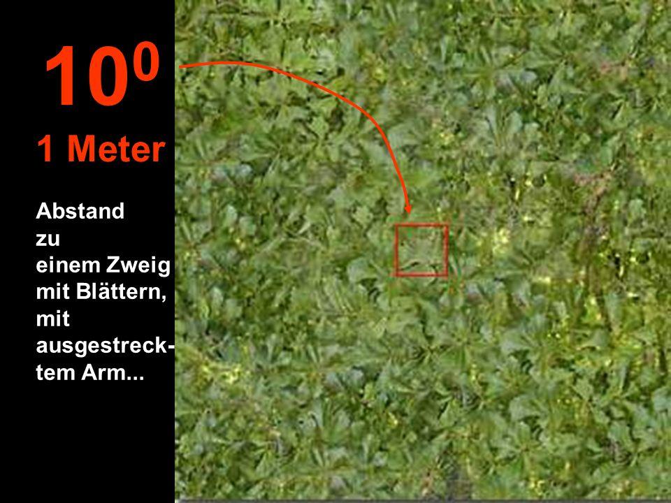 100 1 Meter Abstand zu einem Zweig mit Blättern, mit ausgestreck-tem Arm...