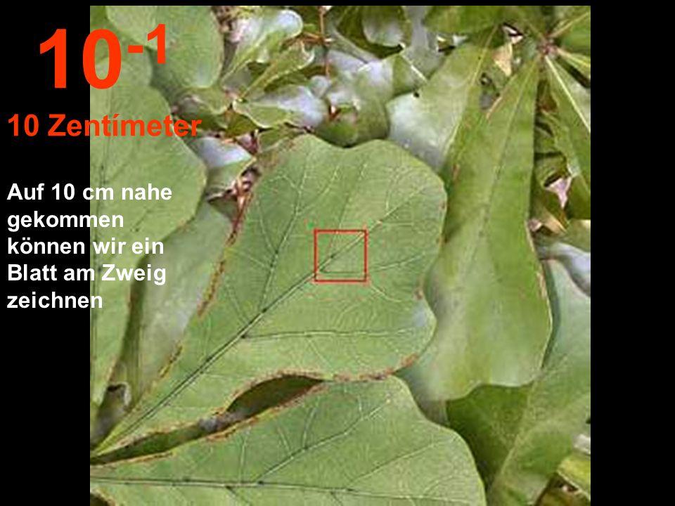 10-1 10 Zentímeter Auf 10 cm nahe gekommen können wir ein Blatt am Zweig zeichnen