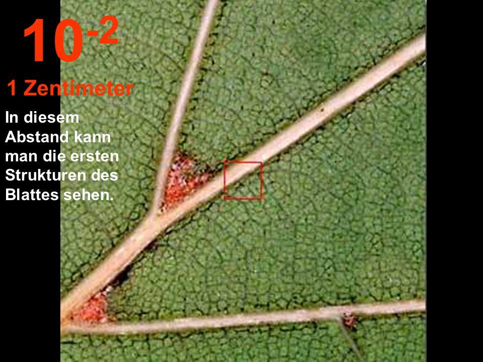 10-2 1 Zentímeter In diesem Abstand kann man die ersten Strukturen des Blattes sehen.