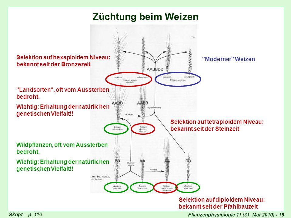 Züchtung beim Weizen Züchtung beim Weizen. Selektion auf hexaploidem Niveau: bekannt seit der Bronzezeit.