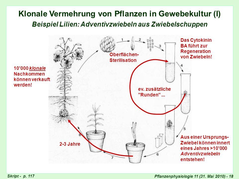 Klonale Vermehrung in Gewebekultur: Lilien