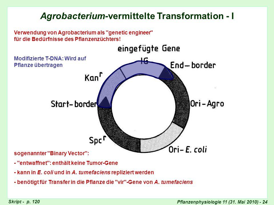 Agrobacterium-vermittelte Transformation - I