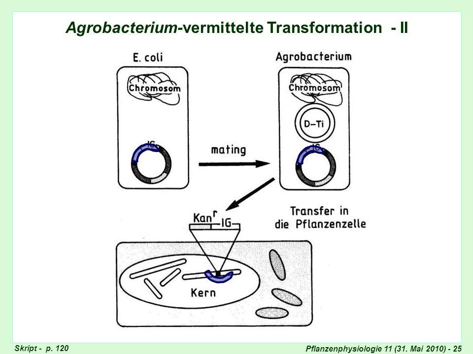 Agrobacterium-vermittelte Transformation - II