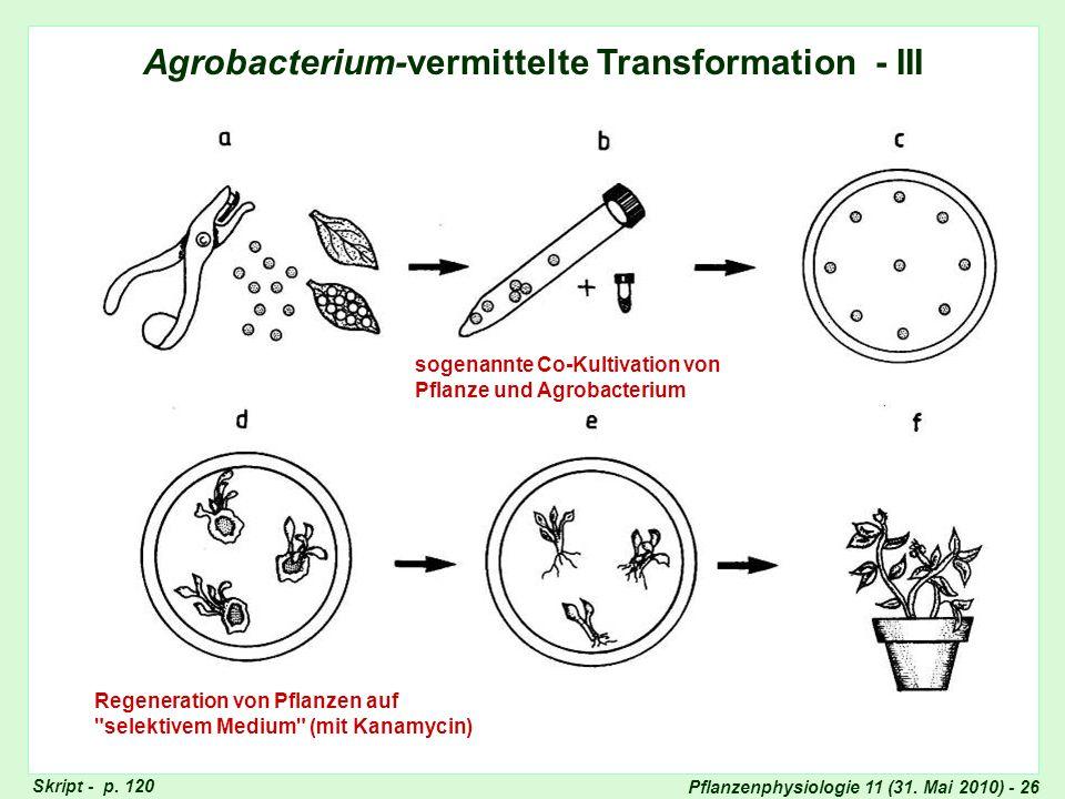 Agrobacterium-vermittelte Transformation - III