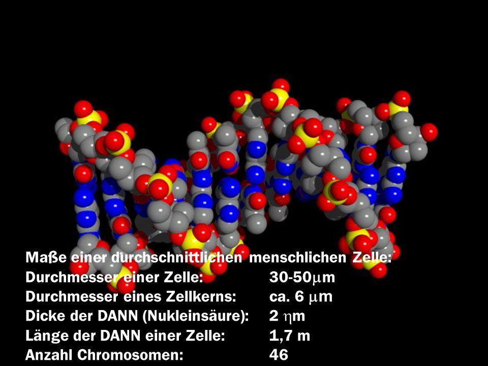 Maße einer durchschnittlichen menschlichen Zelle: