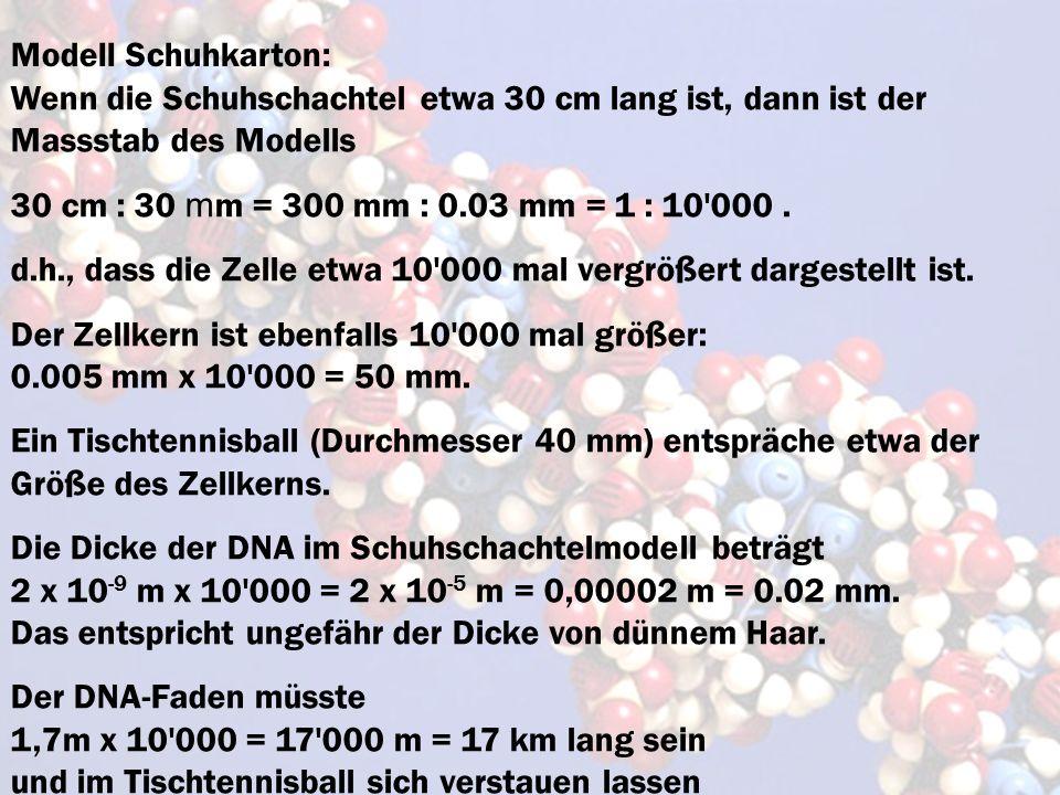 Modell Schuhkarton:Wenn die Schuhschachtel etwa 30 cm lang ist, dann ist der Massstab des Modells.