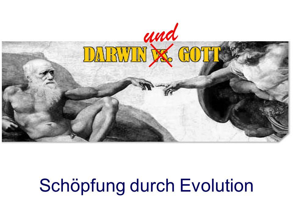 Schöpfung durch Evolution