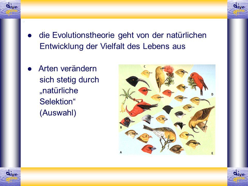 ● die Evolutionstheorie geht von der natürlichen Entwicklung der Vielfalt des Lebens aus