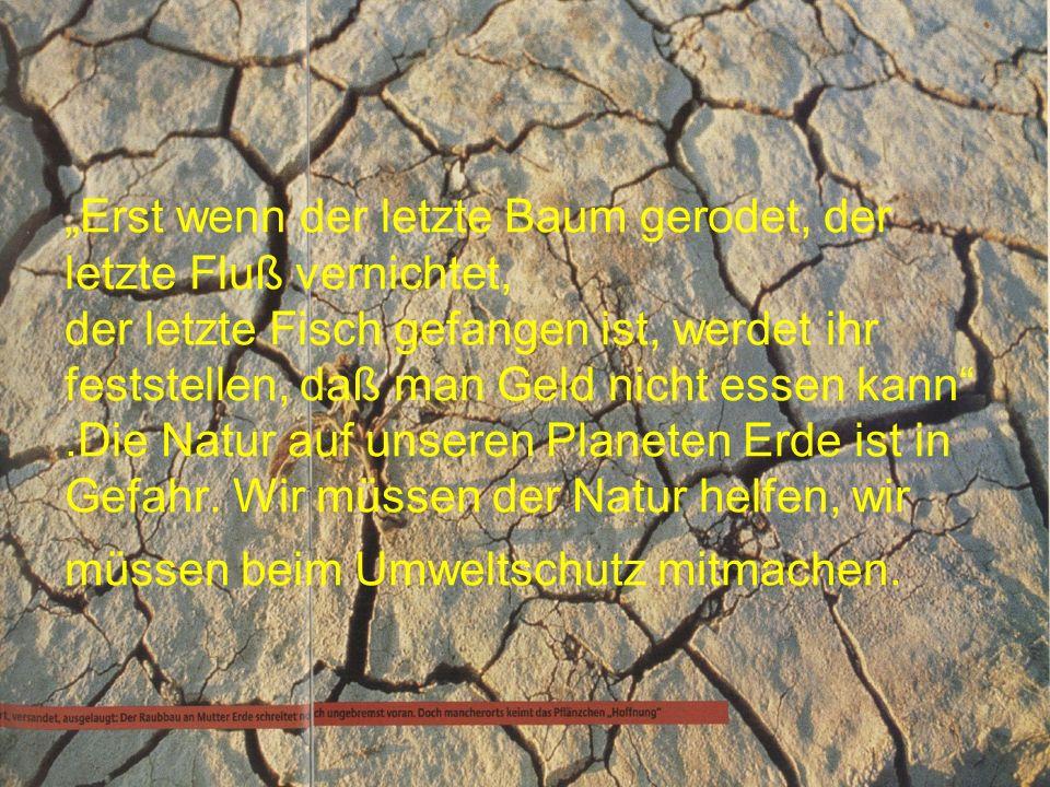 """""""Erst wenn der letzte Baum gerodet, der letzte Fluß vernichtet, der letzte Fisch gefangen ist, werdet ihr feststellen, daß man Geld nicht essen kann .Die Natur auf unseren Planeten Erde ist in Gefahr."""