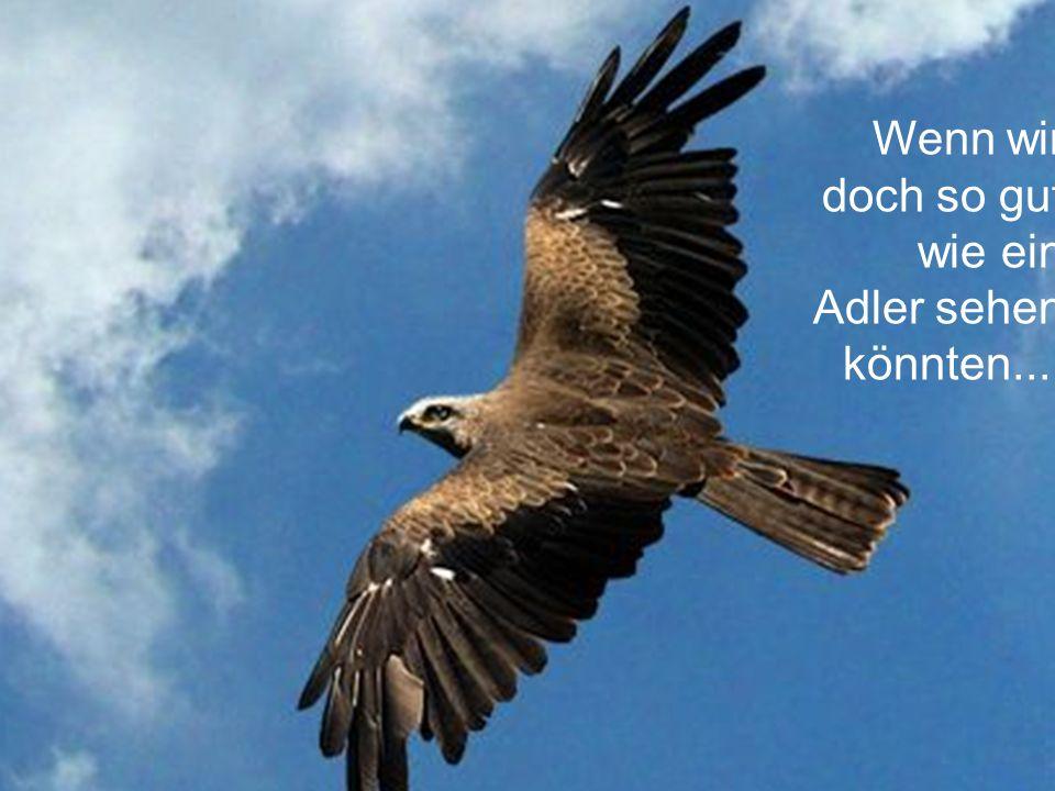 Wenn wir doch so gut wie ein Adler sehen könnten....